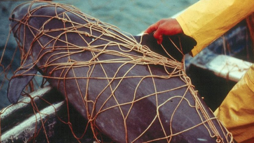 116349768 hi055603532 - Muere un pescador mexicano tras un enfrentamiento con conservacionistas