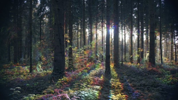 A view of a forest with light shining between trees