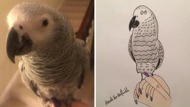 Cartoon of parrot
