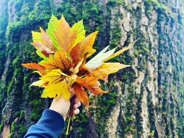 A hand holding some leaves