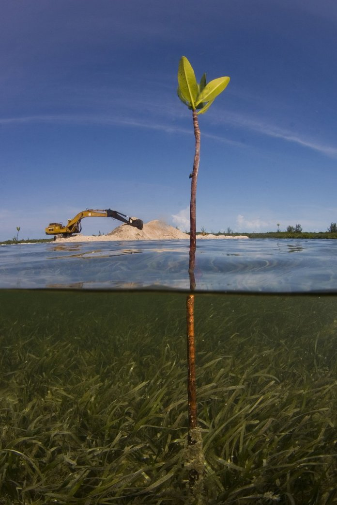 A shot of a mangrove sapling growing out of the water with a bulldozer on land in the background