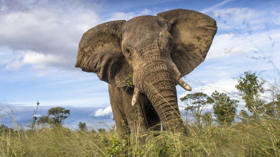 An elephant in Zimbabwe's Hwange National Park