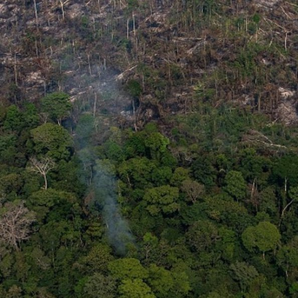 A section of the Amazon rain forest that has been decimated by wildfires