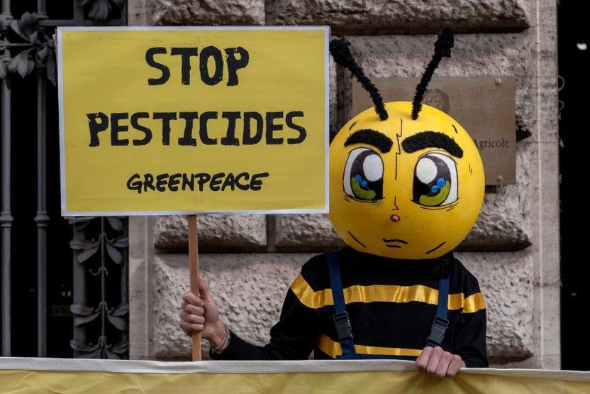 116308352 gettyimages 681818766 - El insecto de 1 milímetro que salvó la economía de un país