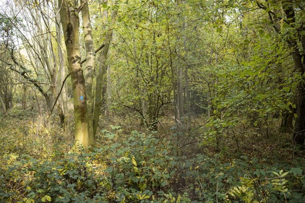 Ancient woodland at the site but untouched by the work