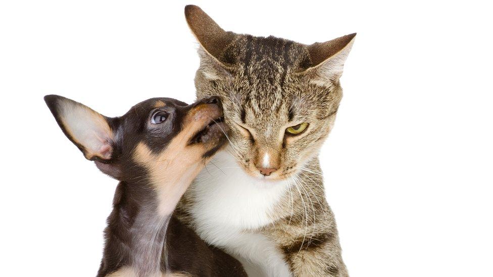 Perro besando a un gato