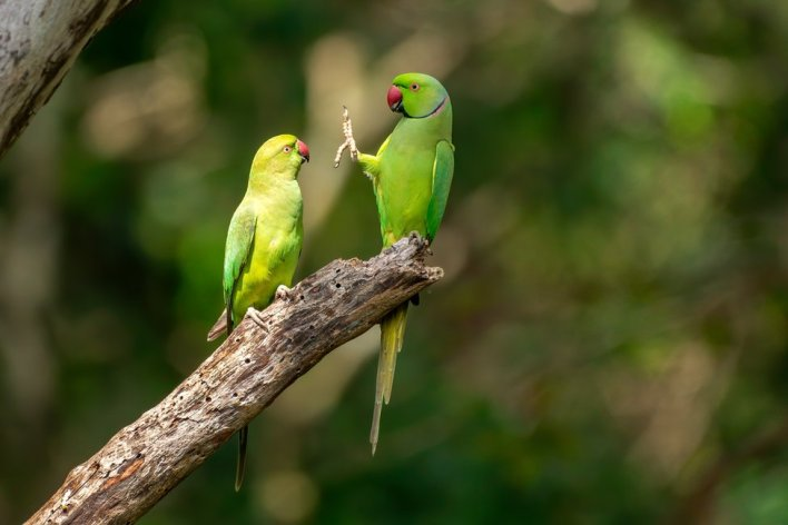 A parrot holding up its foot to another parrot (Foto via www.comedywildlifephoto.com)