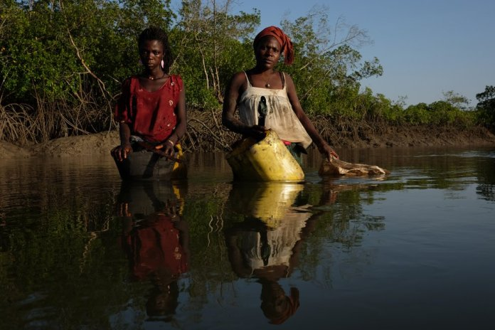 Two women stand in the waters in a mangrove forest holding buckets for collecting oysters