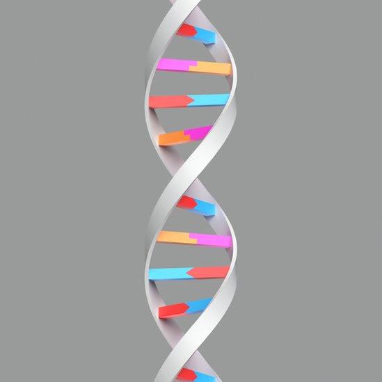 Estructura molecular del ADN.