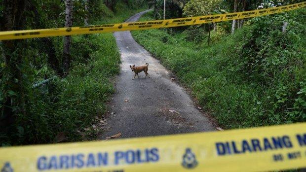 Jungle crime scene
