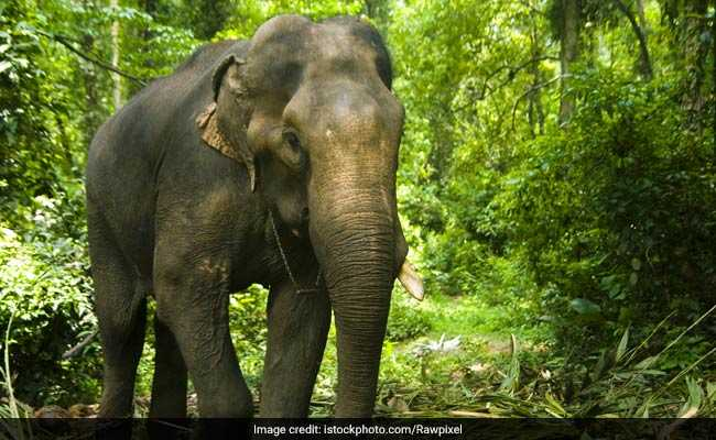 Another Elephant Found Dead In Odisha Sanctuary, Sixth Death This Month