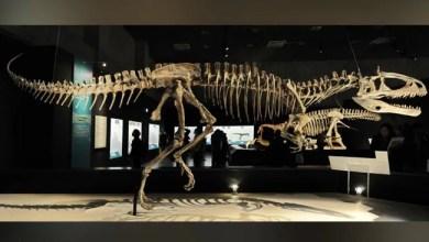 وقتل الديناصورات قبالة الكويكبات أو البراكين ، ومناقشة العلماء 7