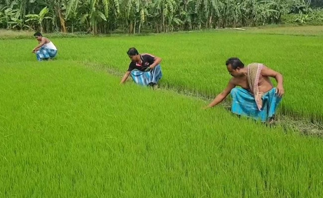 Centre Unveils Strategy To Boost Oilseeds Yield