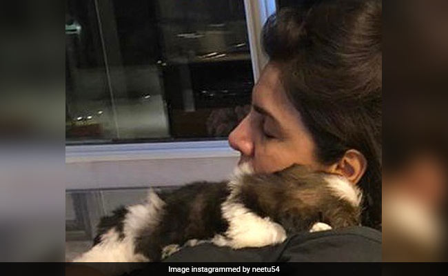 Neetu Kapoor Introduces New Family Member: Fur-Baby Doodle Kapoor. See Pic