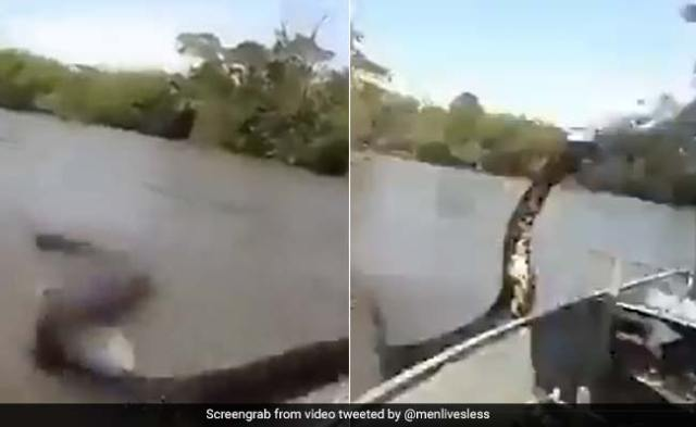 A 17-foot anaconda came near the boat, the man caught the tail and then - see Viral Video