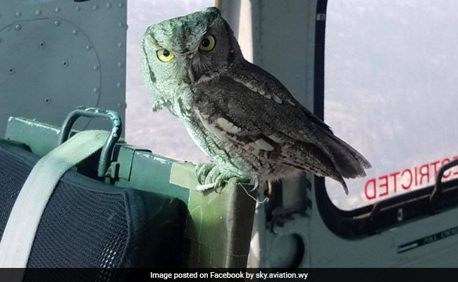 Owl Flies Into Helicopter As Pilot Battles California Wildfires