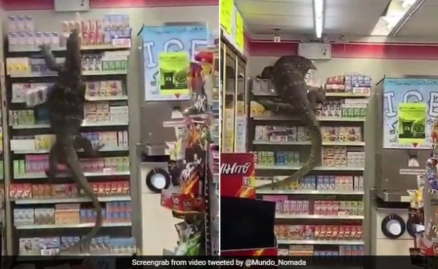 Giant Lizard Creates Chaos At Supermarket. Horrifying Video Is Viral