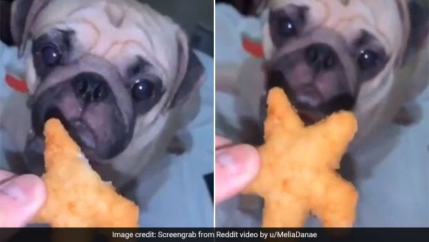 Cuteness Overload! Dog Sweetly Takes A Bite From Human Snack In Video