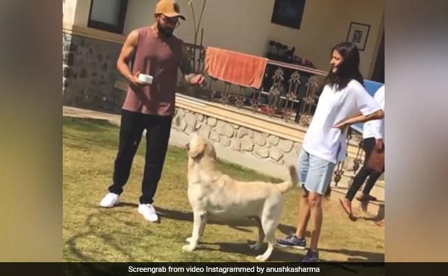When Anushka Sharma And Virat Kohli Spent 'Priceless' Paw-Some Moments Together
