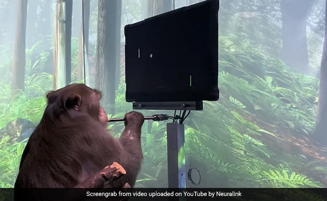 Watch: Elon Musk's Neuralink Reveals Monkey Playing Video Game With Its Mind