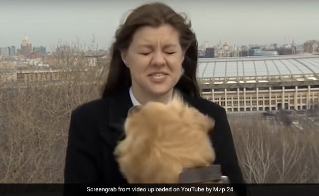 Watch: Dog Runs Away With Reporter's Mic On Live TV
