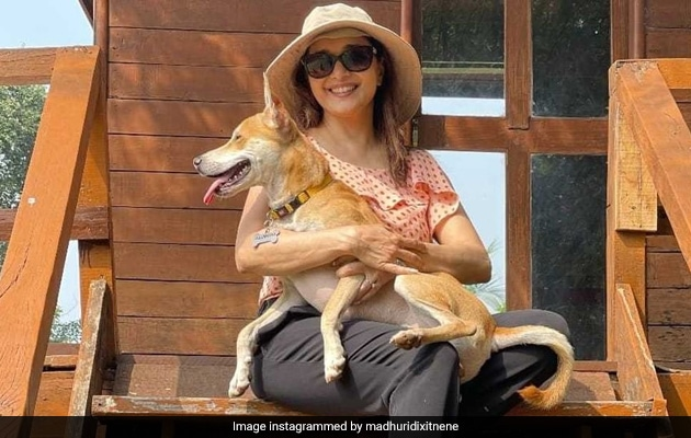 This Is How Madhuri Dixit's Pet Pooch Greets Her When She Returns Home. Dog Moms Will Relate