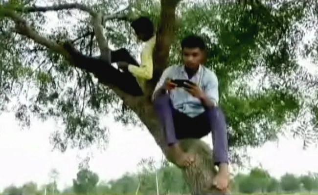 Students Climb 'Network Tree' In Maharashtra Village For Online Classes