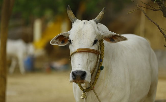 Assam Cow Protection Bill To Encourage Mob Lynching: Congress MP Abdul Khaleque
