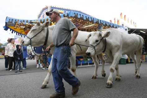 Topsfield, Massachusetts -- 10/06/2014-- Todd Clark, of Willimantic, Connecticut walks his oxen past carnival games as he takes part in the Topsfield Fair Parade at the Topsfield Fair in Topsfield Massachusetts October 7, 2014. Jessica Rinaldi/Globe Staff Topic: Reporter: