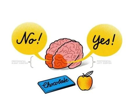 Facing a decision over whether to eat a nutritious apple or decadent chocolate bar activates the brain's prefrontal cortex. The right side propels you to say no to the chocolate temptation while the left side encourages you to say yes to the apple to curb your hunger.