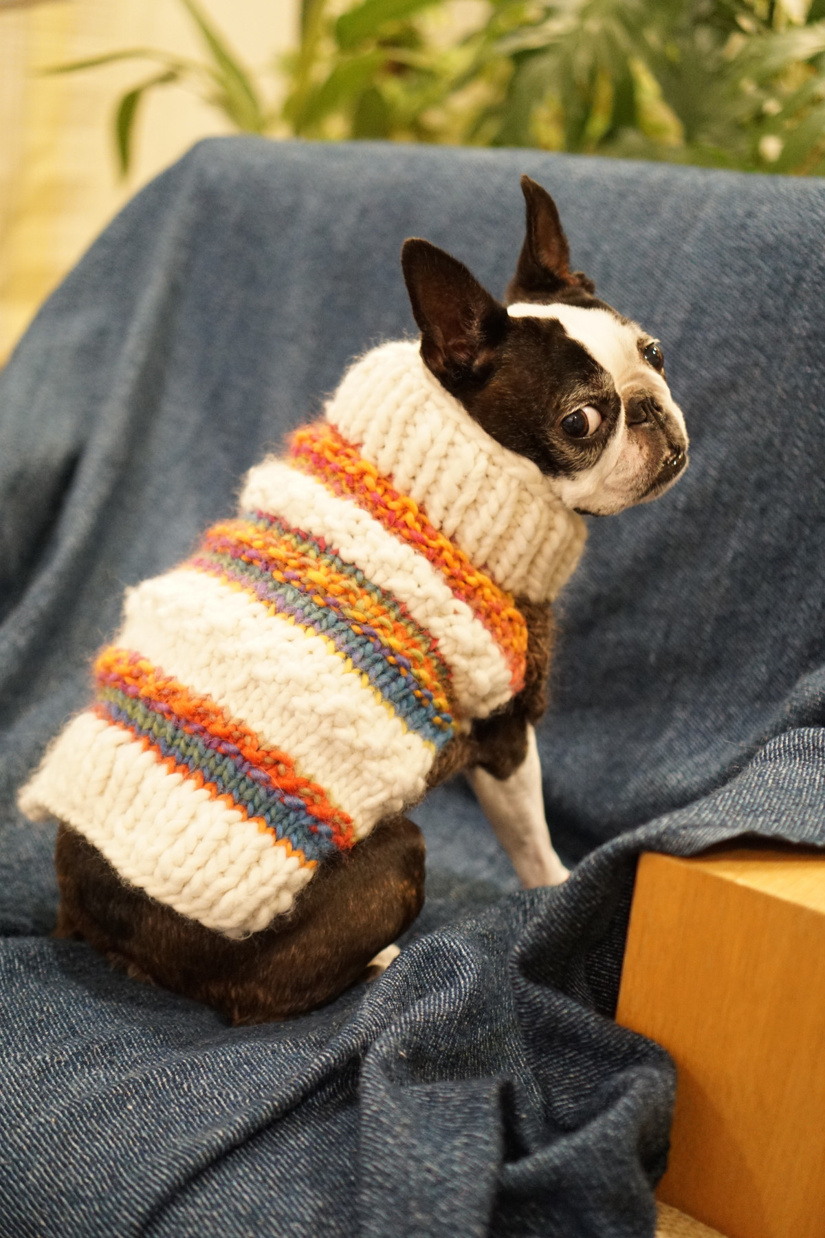 Free Images Pet Textile Art Boston Terrier Dog Like