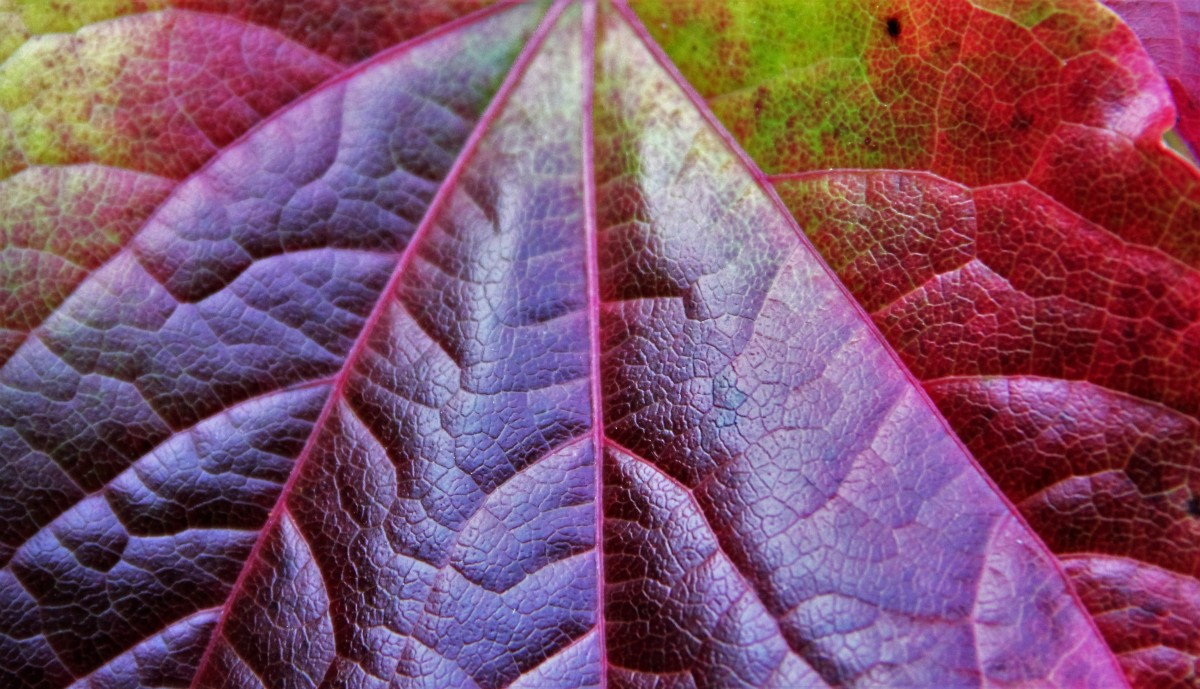 Free Images Nature Plant Vine Texture Flower Purple
