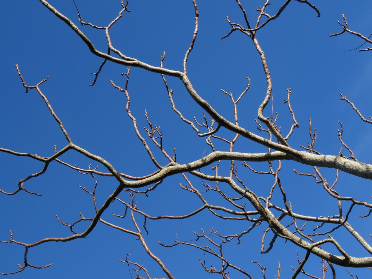 Free Images Tree Nature Branch Winter Sky Leaf