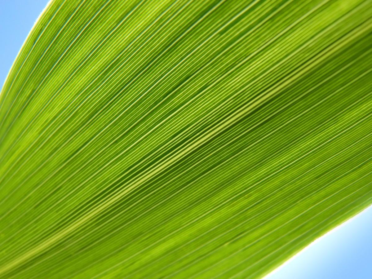 Free Images Field Lawn Sunlight Wave Flower Line