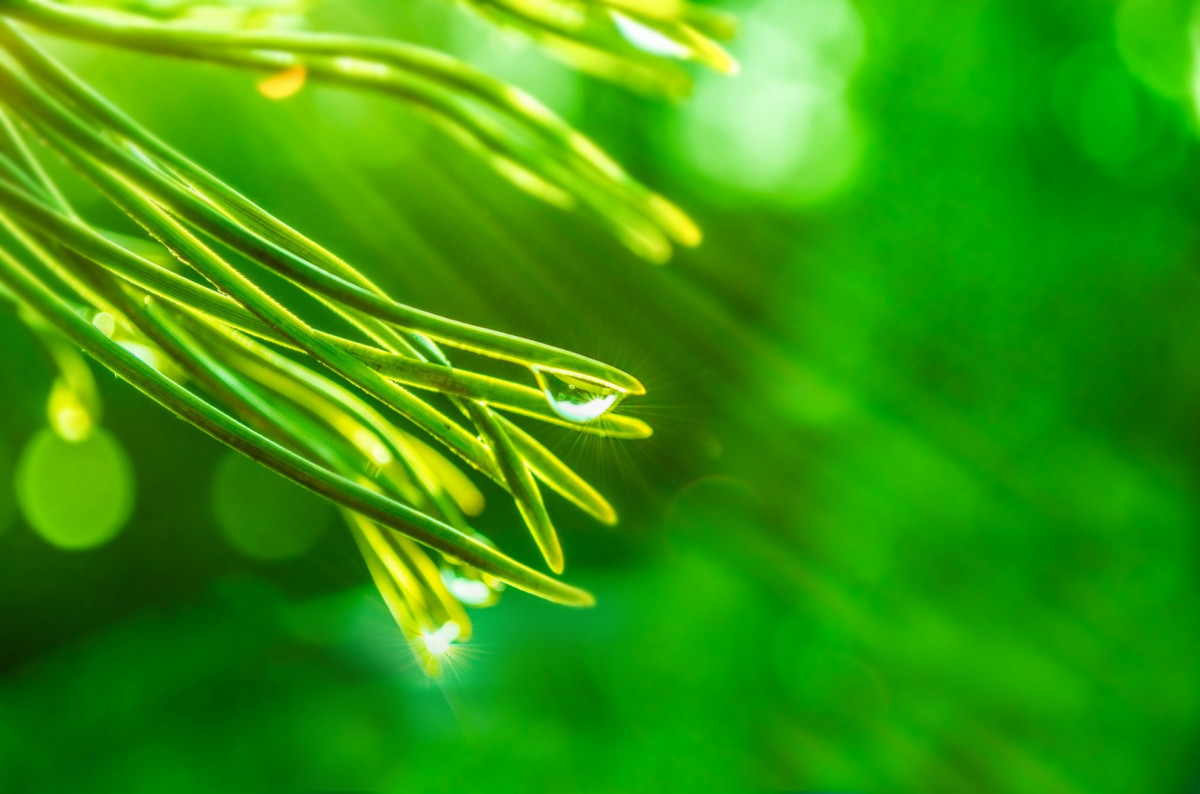 Free Images Tree Nature Branch Growth Sunlight Leaf
