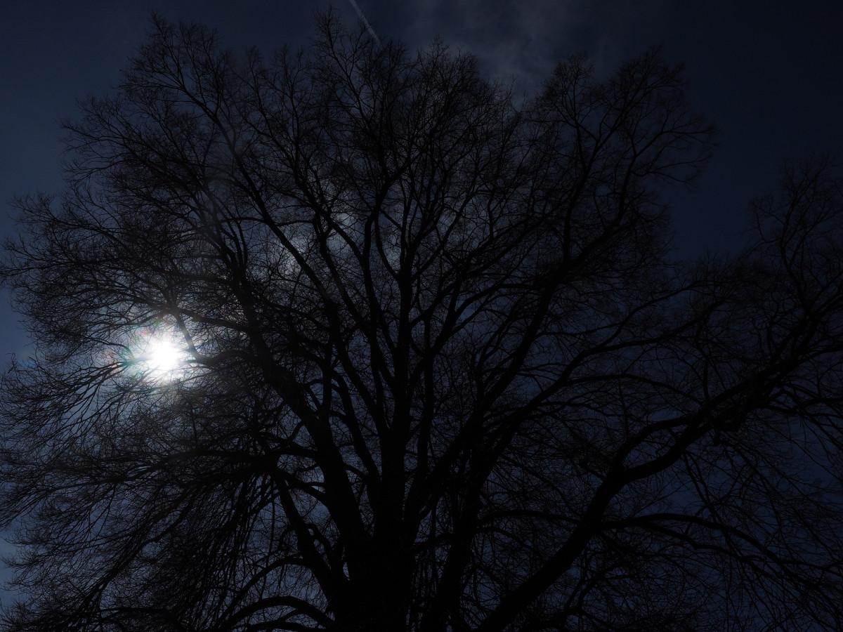 Free Images Tree Nature Winter Light Bokeh Fog