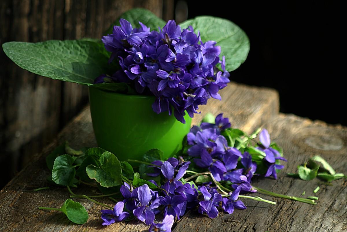 Images Gratuites Fleur Violet Bleu Flore Lavande