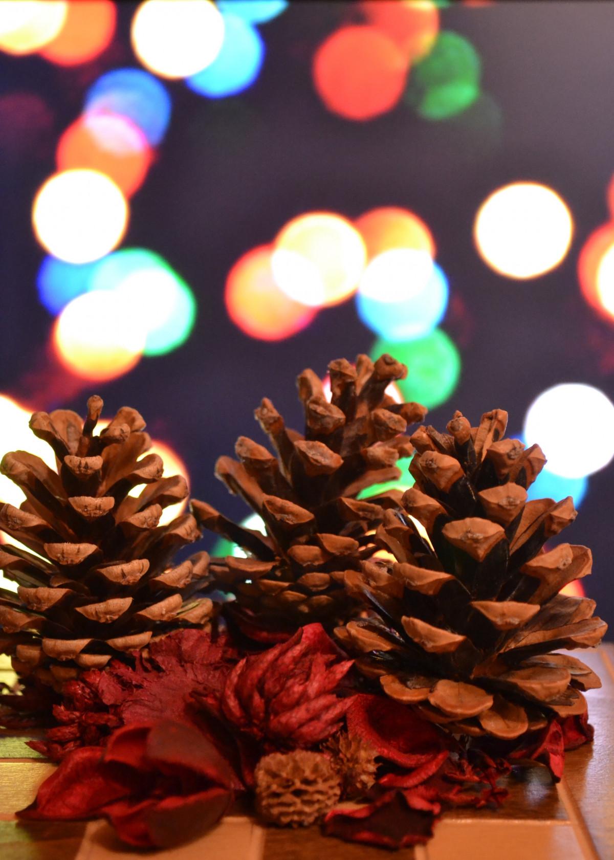 Free Images Flower Petal Red Color Dessert Lighting