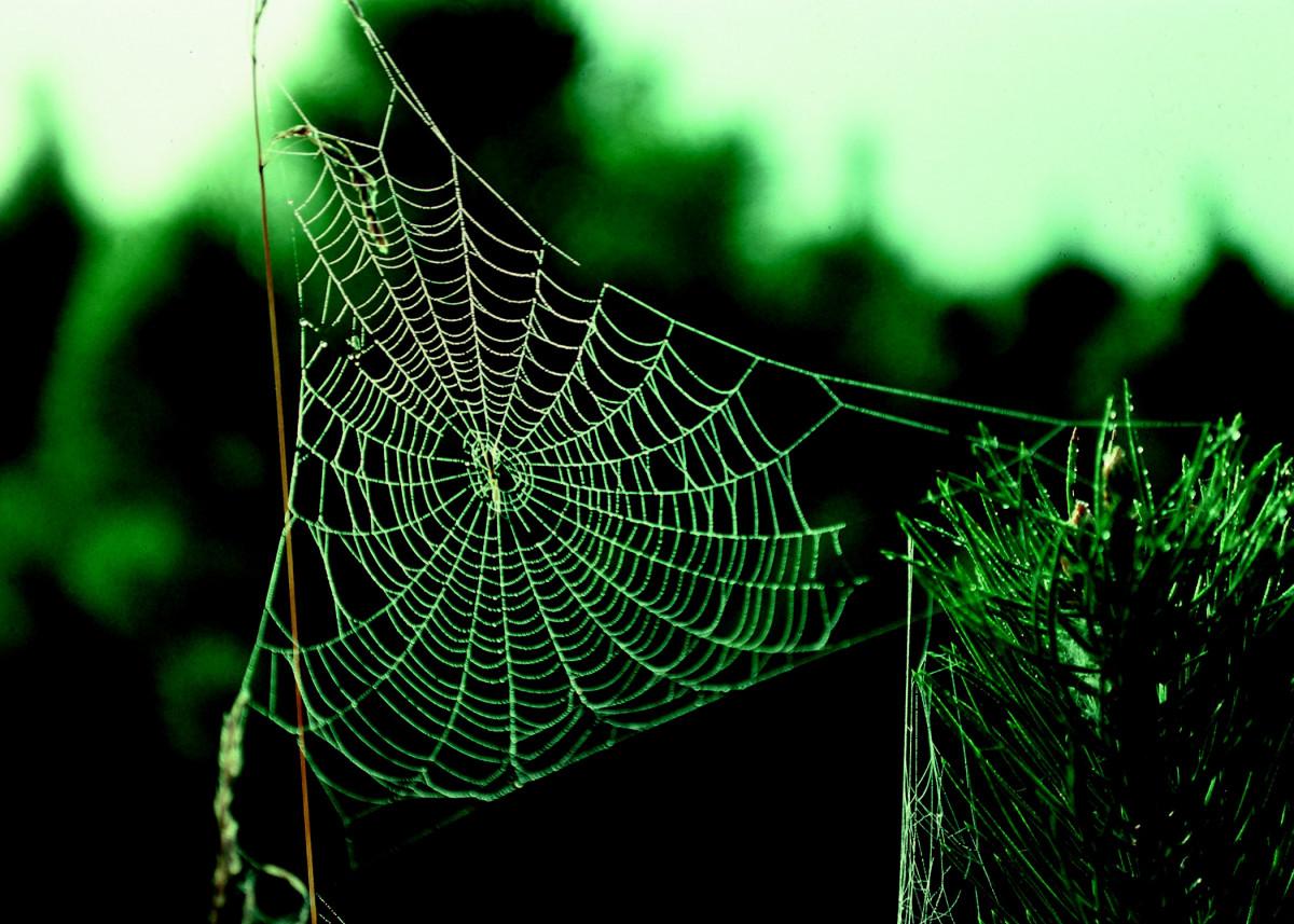 Free Images Window Pattern Material Invertebrate