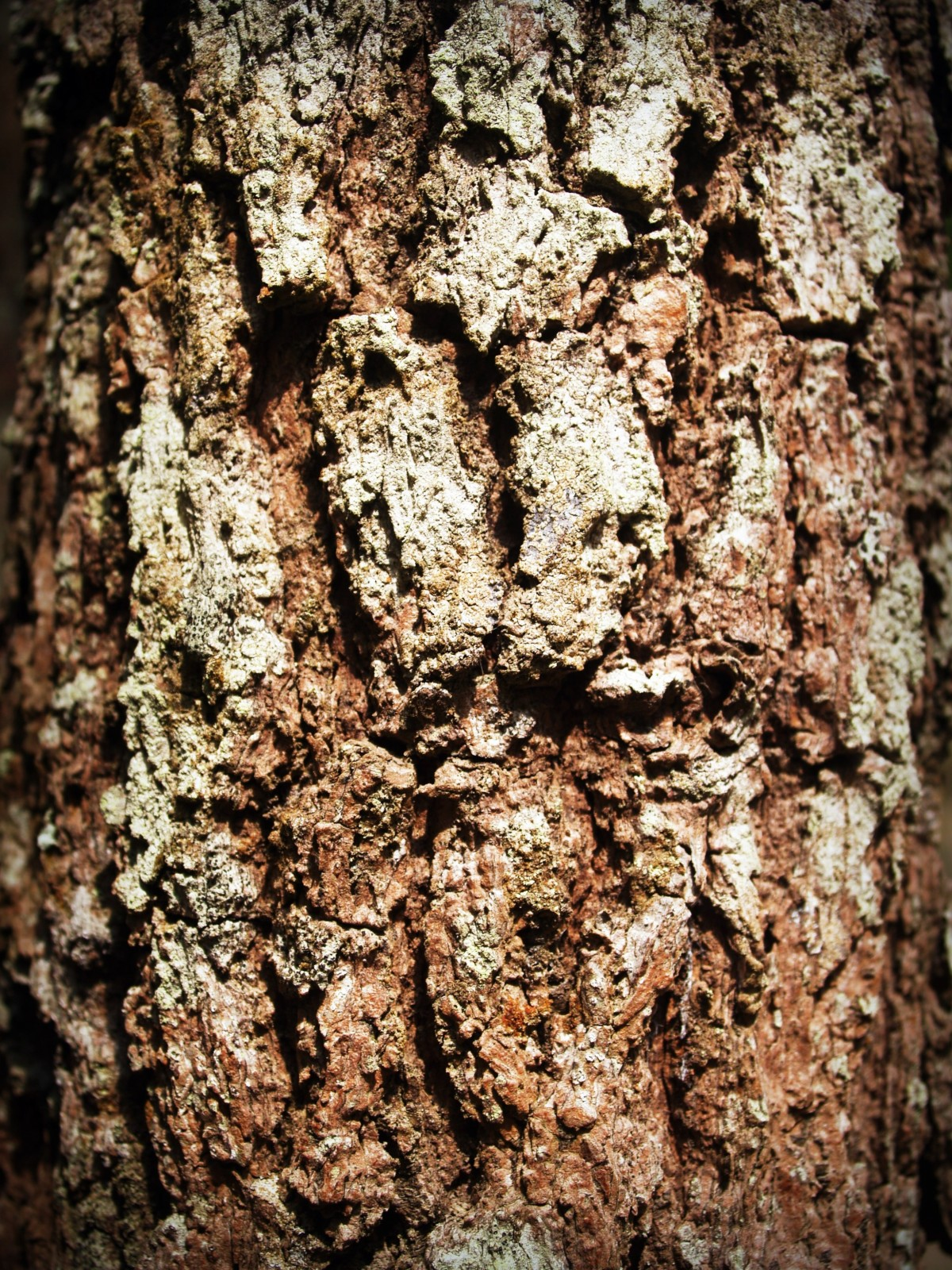 Free Images Tree Nature Forest Branch Abstract
