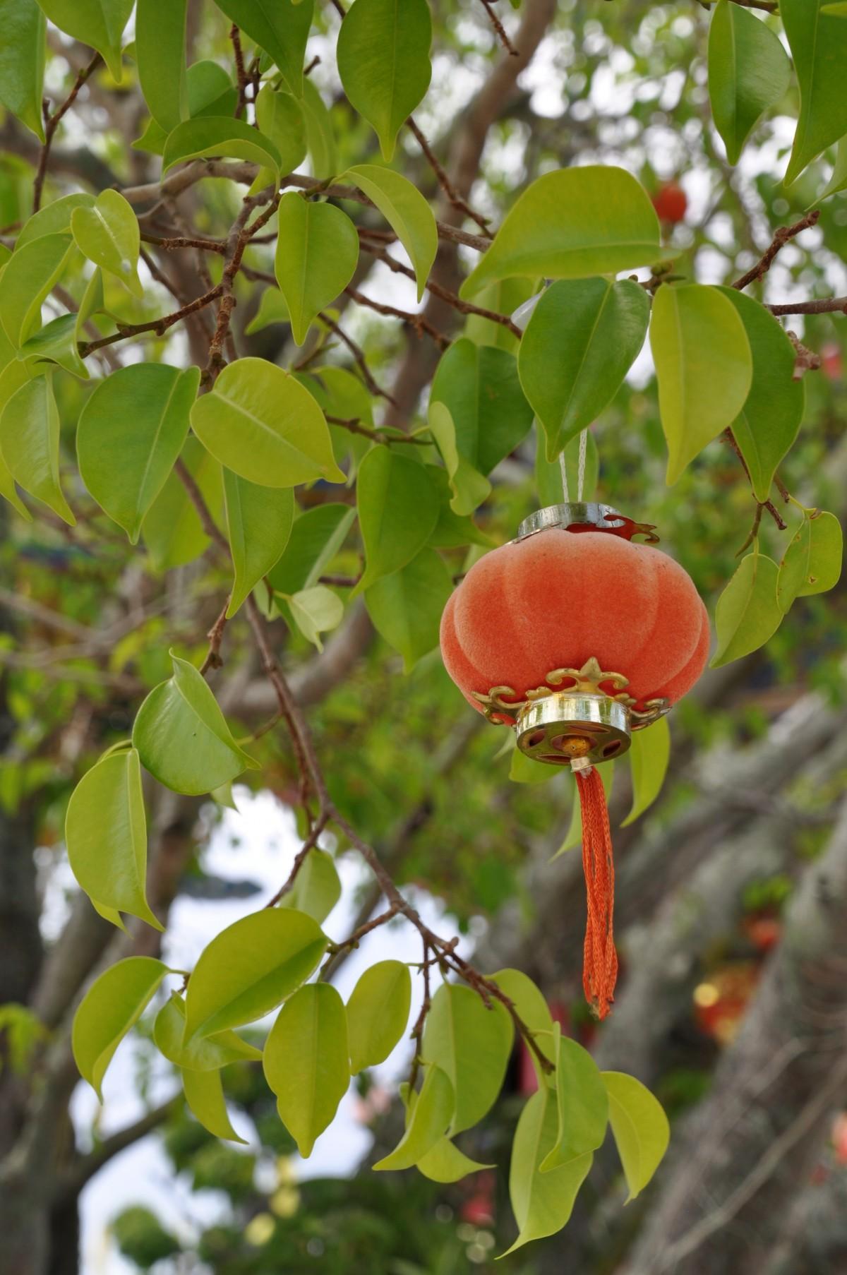 arbre branche fleur fruit feuille