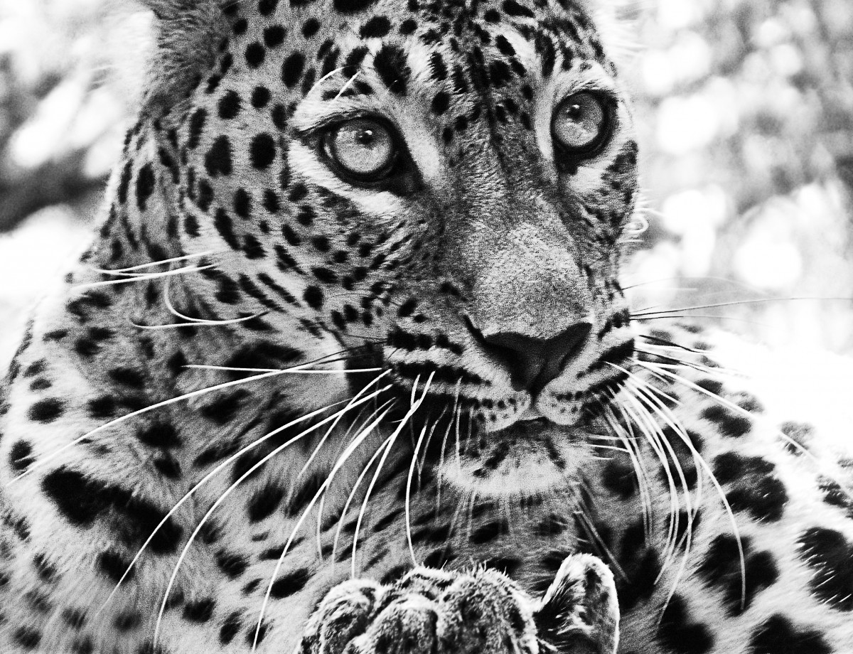 Free Images Nature Black And White Animal Wildlife