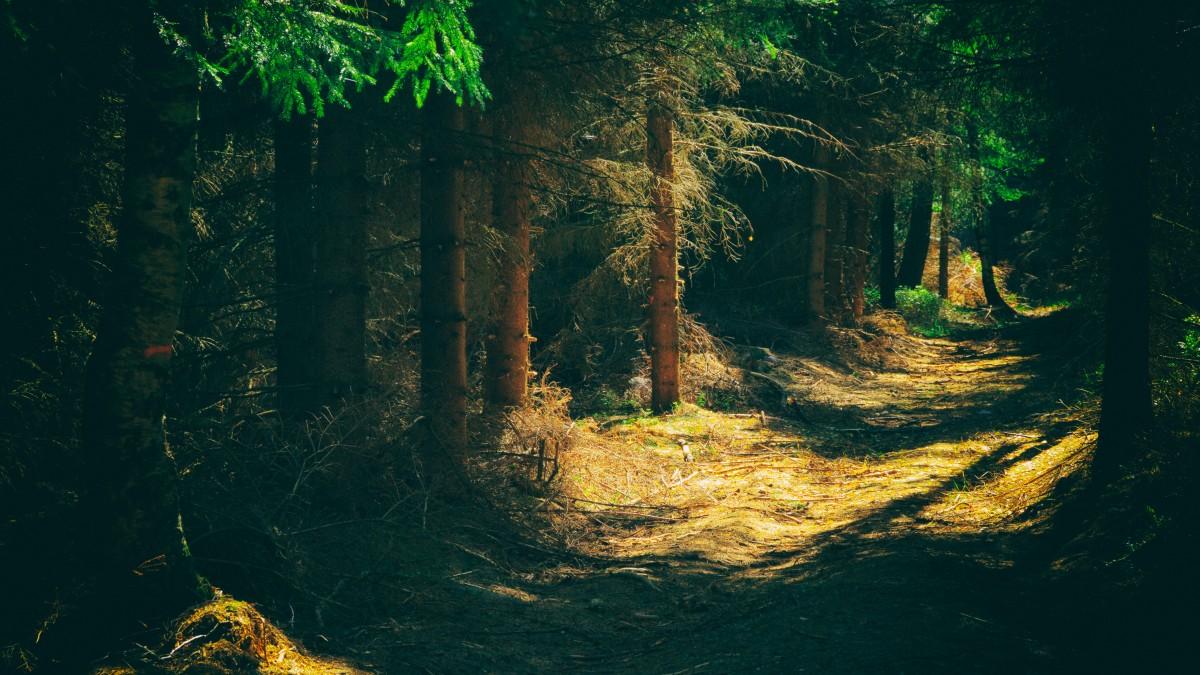 Free Images Tree Nature Forest Light Bridge Night