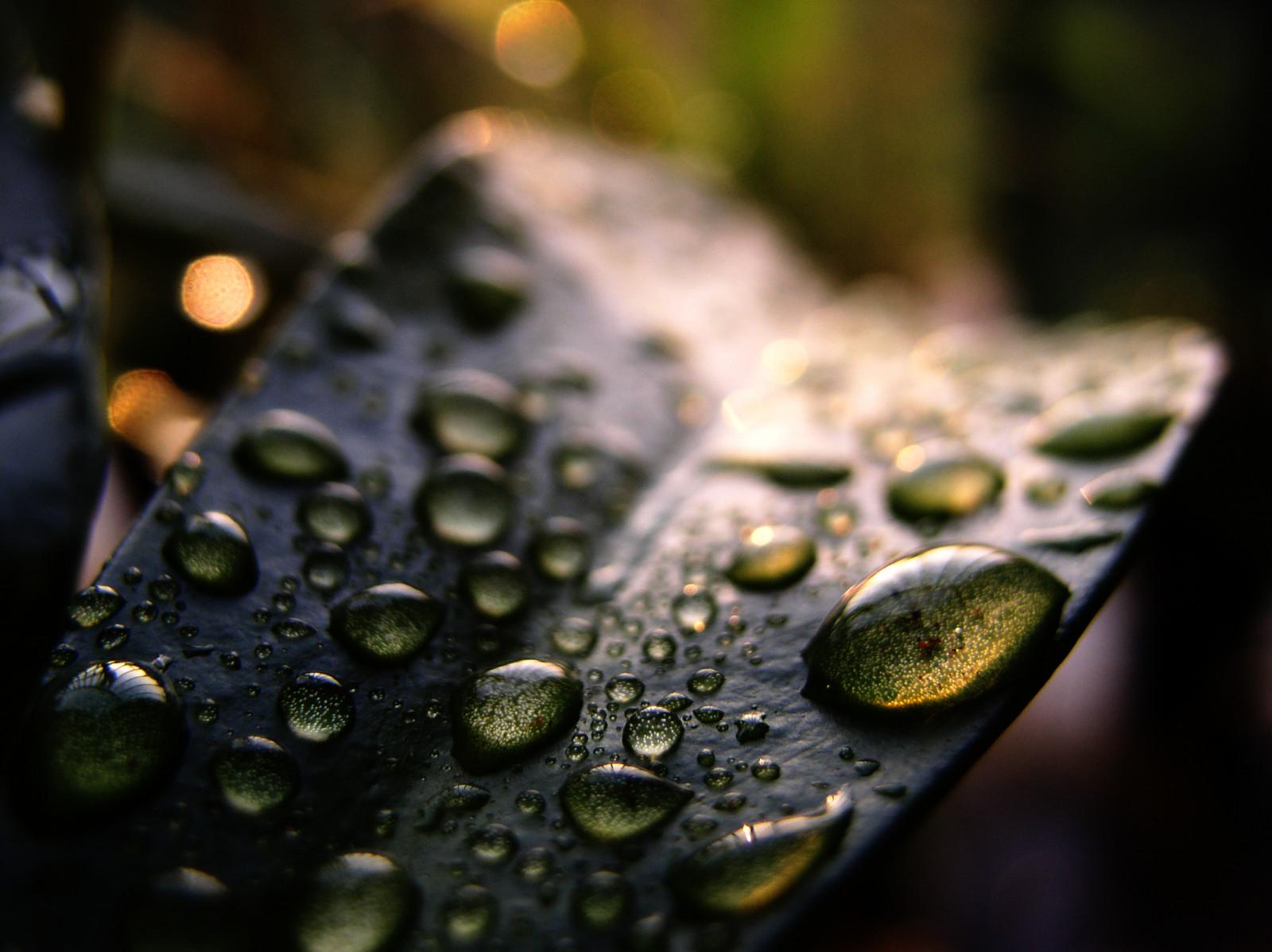 matin macro eau feuilles aube