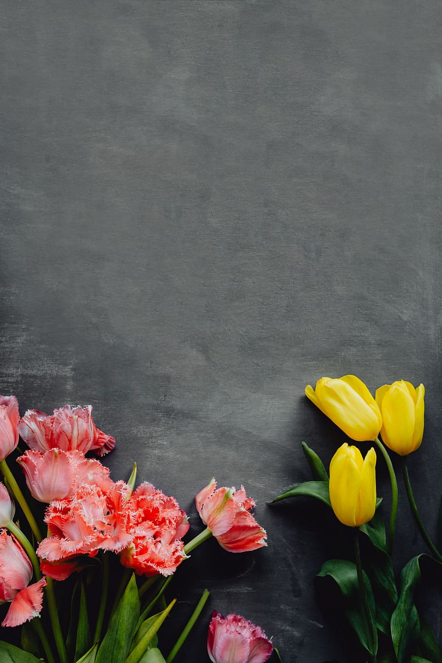 Hd Wallpaper Colorful Flowers On Grey Background With Copy Space Bloom Floral Wallpaper Flare