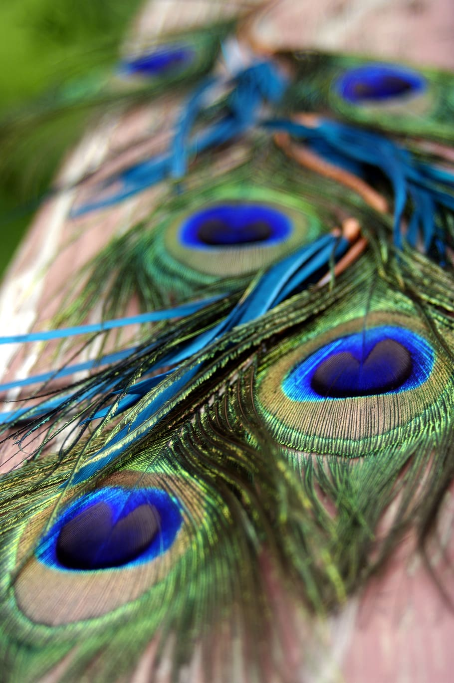 Hd Wallpaper Peacock Peacock Feather Peacock Feathers Green Blue Teal Wallpaper Flare