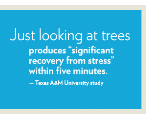 trees help you de-stress