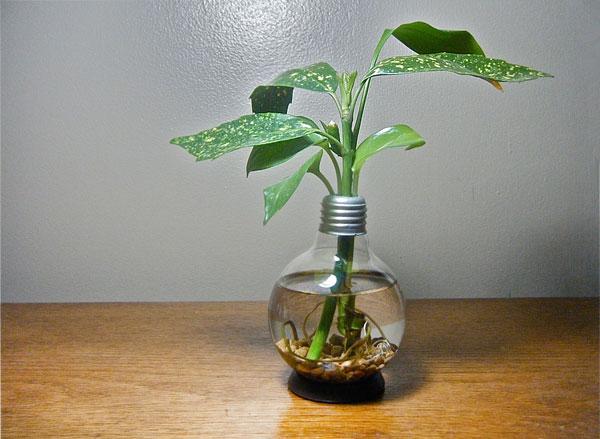 Recycling Light Bulbs