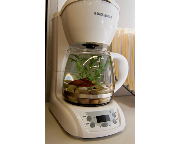 Coffee maker fishbowl