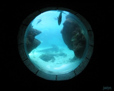 underwater window | taken at the aquarium at the atlantis ...